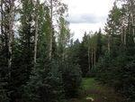 Property in CRIPPLE CREEK,CO